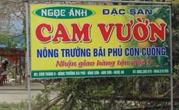 Đua nhau trồng, cam Con Cuông đứng trước bài toán cung vượt cầu