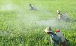 Mỗi tháng Việt Nam chi trên 83,5 triệu USD nhập khẩu thuốc trừ sâu