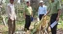 Đồng Nai: Đàn voi rừng liên tiếp xuất hiện, phá hoại hoa màu của người dân