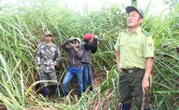 Tổ trưởng kiểm lâm Vườn quốc gia Cát Tiên bị đâm trọng thương