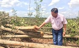 """Đồng Nai: Người dân kêu cứu vì 10ha rừng tràm """"bỗng dưng"""" bị chặt hạ"""