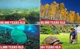 Choáng ngợp với những sinh vật sống lâu đời nhất thế giới
