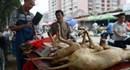 Trung Quốc cấm bán thịt chó ở lễ hội thịt chó lớn nhất hành tinh