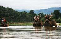 Bơi cùng voi trên hồ Lắk