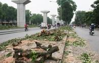 Phó Thủ tướng yêu cầu sớm kết luận, xử lý nghiêm vụ chặt cây xanh ở Hà Nội