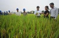 Tiến tới Vinh Quang Việt Nam lần thứ XII: Tổng giám đốc của nhà nông