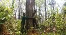 """Hai """"mãnh hổ"""" giữ rừng hương"""