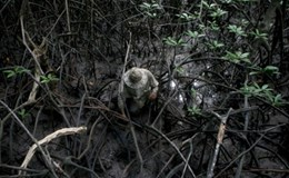 Mưu sinh trong rừng Cần Giờ