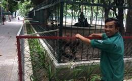 Những con thú cuối cùng trong thành phố