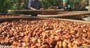 Nông sản Việt và câu chuyện  về sự bền vững