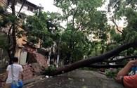 Thêm những hình ảnh cây đổ, ôtô bị đè bẹp trên các tuyến đường Hà Nội
