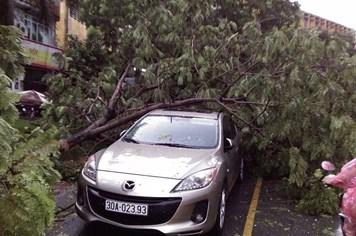 Hơn 120 cây đổ, 13 ôtô bị cây đè sau cơn mưa lớn ở Hà Nội