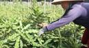 """Dự án nông nghiệp 37 triệu USD trước nguy cơ phá sản: UBND tỉnh Quảng Trị ra """"hạn cuối cùng"""" lần thứ 14"""