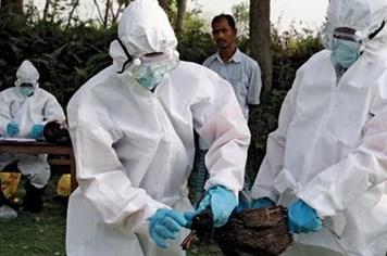 Tăng cường giám sát cúm A/H7N9 trên gia cầm và người