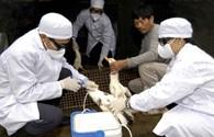 Chưa thể khẳng định virus H7N9 lây từ người sang người