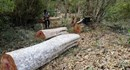 Gia Lai: Lâm tặc phá rừng tại Ban quản lí rừng phòng hộ Ia Grai