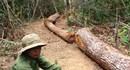 Gia Lai: Tiếp tục đề xuất tặng gỗ tang vật cho người nghèo