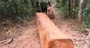Gia Lai: Chủ tịch huyện phải chịu trách nhiệm nếu để mất rừng