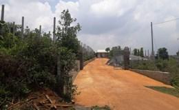 Gia Lai: UBND tỉnh yêu cầu điều tra BQL rừng phòng hộ Bắc Biển Hồ để mất 2.400 ha đất lâm nghiệp