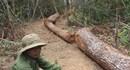 Tặng 52,5m3 gỗ tang vật một vụ án cho dân nghèo
