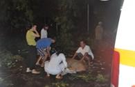 VIdeo: Hiện trường cây xà cừ bật gốc đè chết một người