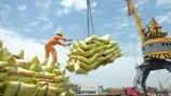 Xuất khẩu gạo: Giá bán không theo kịp giá mua