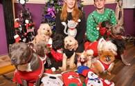 Cô chủ chi đậm để tổ chức tiệc Giáng sinh cho 12 chú chó cưng