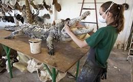 Rùng mình với khung cảnh ở xưởng nhồi xác động vật
