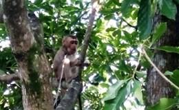 Người dân tự nguyện giao nộp nhiều động vật rừng hoang dã quý hiếm
