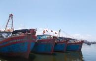 Quảng Nam: Còn 33 tàu cá đóng mới chưa được cho vay theo N-ghị định 67