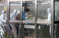 Xét nghiệm ca nghi nhiễm Mers đầu tiên ở Châu Âu