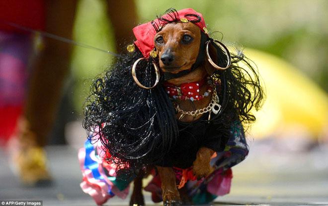 Ấn tượng với những chú chó ăn vận như người mẫu siêu ngộ nghĩnh