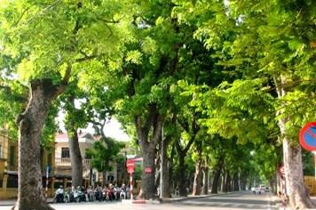 """Hơn 1.000 cây xanh sẽ """"giã từ"""" Thủ đô giữa hè nắng nóng"""