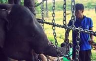Một ngày tại Trung tâm bảo tồn voi Đắk Lắk