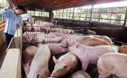 """Giá lợn trên 45 nghìn đồng/kg là """"có vấn đề"""""""