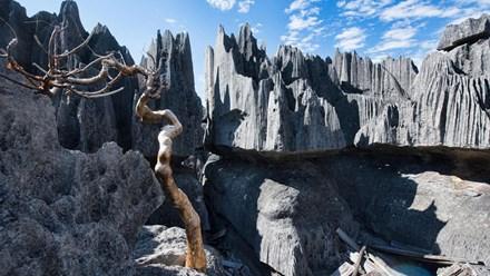 Trekking rừng đá Tsingy: Khung cảnh kỳ vĩ với những vỉa đá sắc như dao cạo - ảnh 1