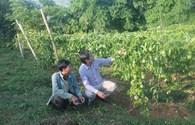 Nghệ An: Huy động tổng lực giảm nghèo bền vững