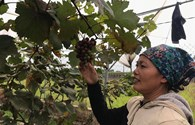 Hà Nội: Xây dựng nông thôn mới đạt nhiều kết quả khả quan