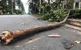 Nữ công nhân bị cành cây rơi trúng người đã ra đi, để lại hai con thơ