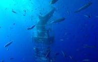 Kinh hoàng khoảnh khắc cá mập trắng điên cuồng tấn công 4 thợ lặn