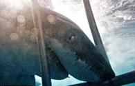 Kinh hoàng khoảnh khắc cá mập trắng hung hãn tấn công lồng sắt, áp sát thợ lặn