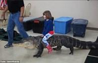 Sốc: Bé gái cưỡi cá sấu khiến nhiều người hoảng hồn