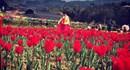 Cánh đồng hoa tulip đẹp mê mẩn ở Bắc Hà khiến giới trẻ phát sốt