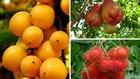 Những thiên đường trái cây có thể đi về trong ngày từ TPHCM