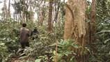 Bí ẩn rừng thiêng nguyên sinh, đầy muông thú giữa… đồng bằng