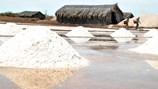 Nhọc nhằn hạt muối Bạc Liêu: 50kg muối = 1 bát phở Hà Nội
