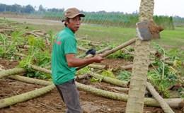 Nông dân vùng Tây Quảng Nam mất Tết vì hứng lũ bất thường