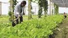 Hà Nội chú trọng nông nghiệp công nghệ cao