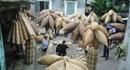 Chuyện giữ nghề đan Đó truyền thống hơn 200 năm tuổi
