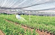 Hà Nội: Hơn 76% số xã đạt chuẩn nông thôn mới